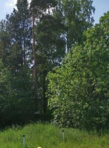 Продажа участка, Косколово, Лесная